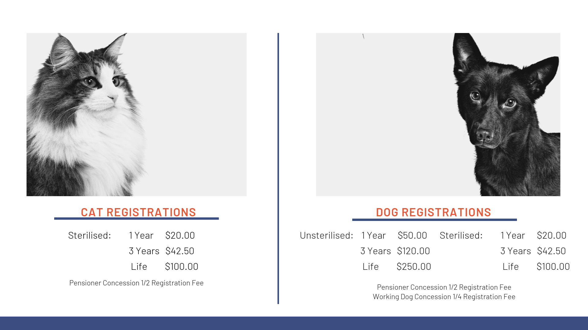 Cat and Dog Registrations